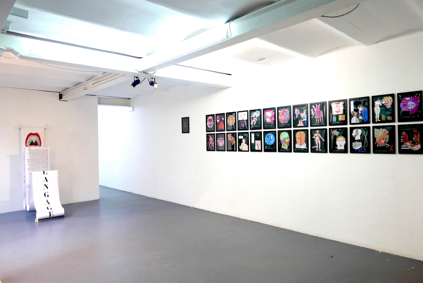 Vue d'exposition, Anatomie littérature 26 planches rehaussées de couleurs | art-cade*