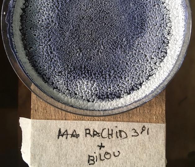 Delphine Mogarra, Résidence Rouvrir le monde, Expérience cyanotype | art-cade*